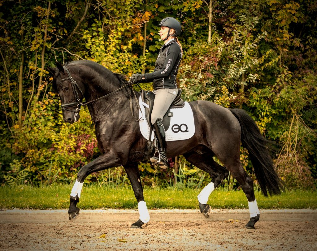 Horse app training sensor