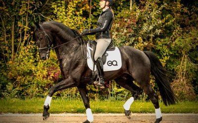 Paarden app om je training te verbeteren