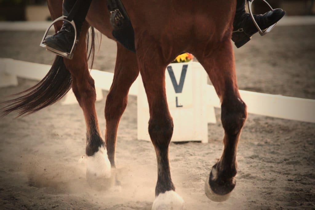 Straightness horse