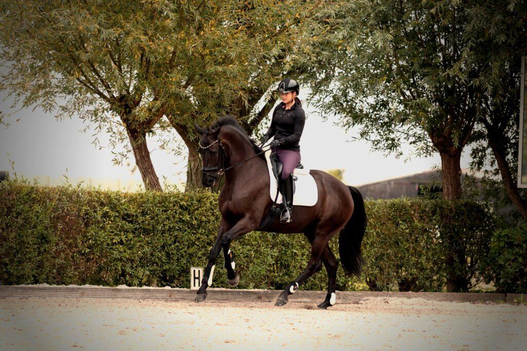 Equine gait analysis app