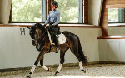 Effectief dressuur paarden trainen: bevestig je gevoel met data