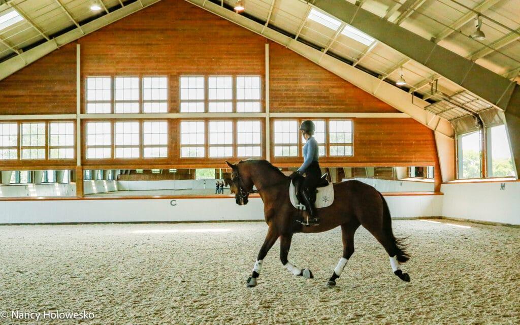 Dressuur paarden trainen