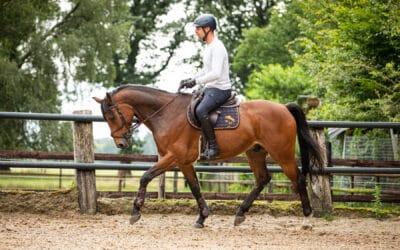 7 tips paard trainen: Zo weet je of jouw paard fit is